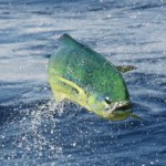 Charleston Area Fishing Charters, recreation guide