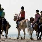 Charleston Area Equestrian, recreation guide
