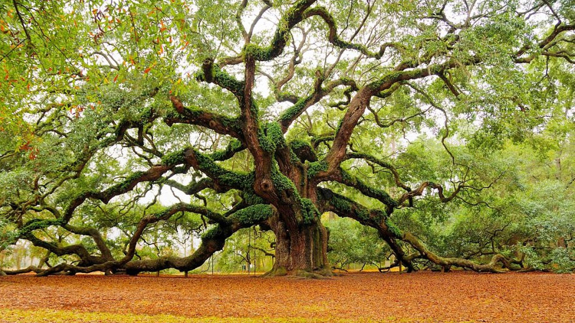 Community scrambles to secure funds for angel oak