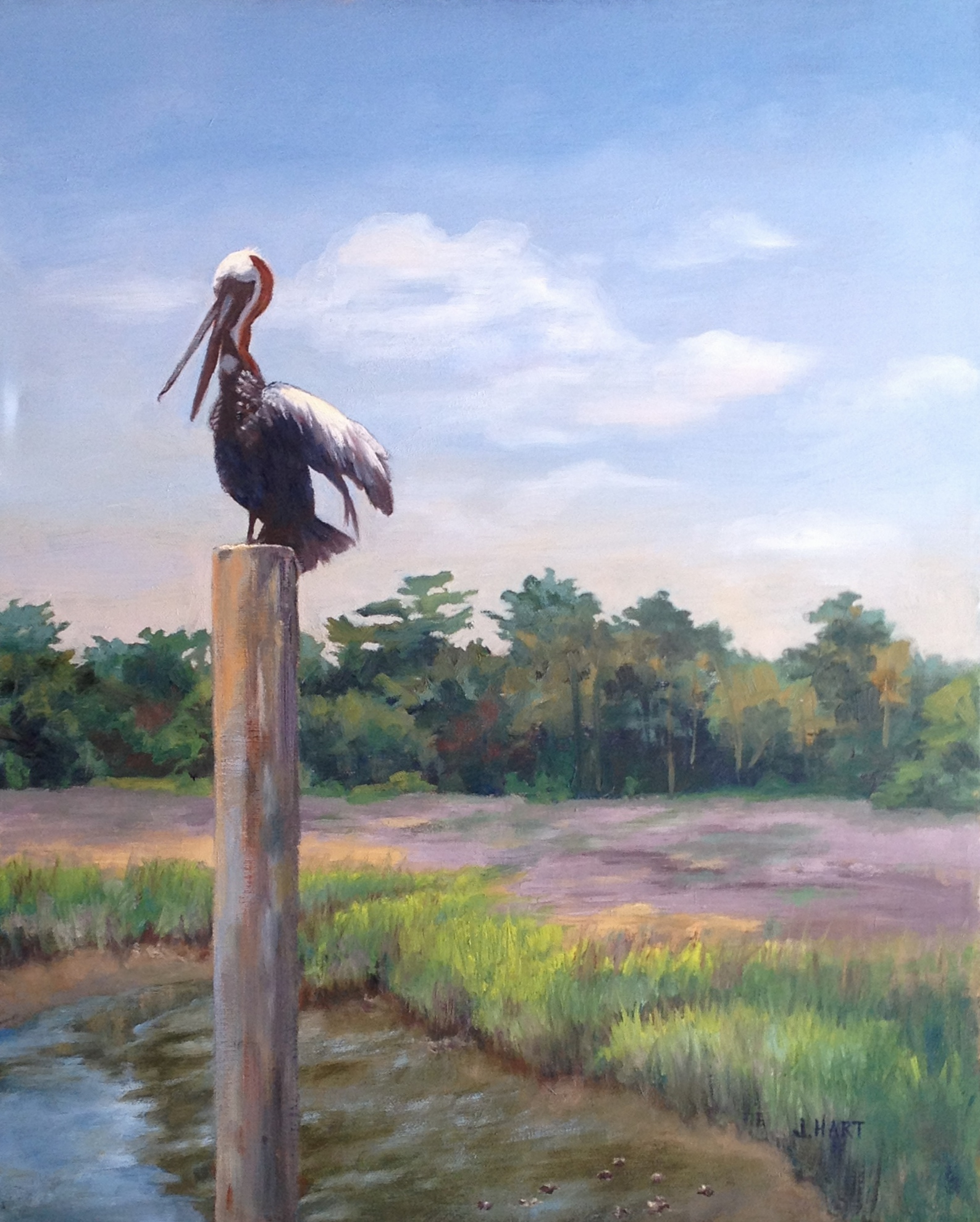 Pelican's Perch  by Jane Hart