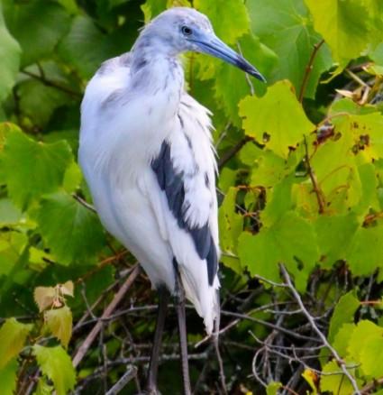 Kiawah Island Adventures