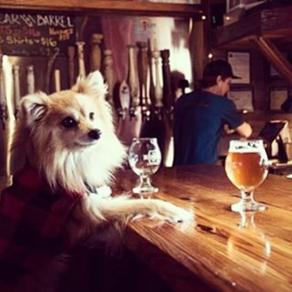 Dog friendly Charleston The Barrel @thebarrelcharleston