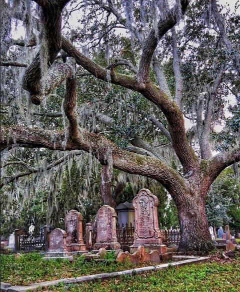 Charleston's Cemetaries